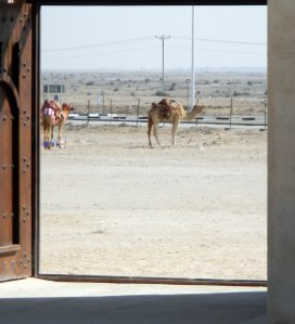 desert-camels-from-fort-door
